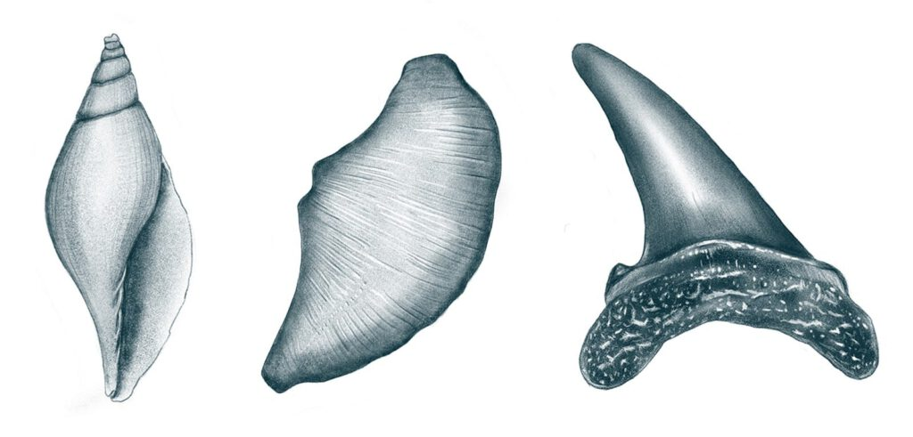 Dehennin poodlesoup illustration fossielen